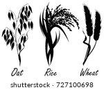 wheat  rice  oat. set of...   Shutterstock .eps vector #727100698
