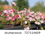 garden fence with pink roses ... | Shutterstock . vector #727114609