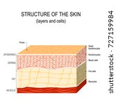 structure of the human skin.... | Shutterstock .eps vector #727159984