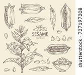 collection of sesame  sesame... | Shutterstock .eps vector #727197208