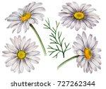 set of watercolor chamomiles ... | Shutterstock . vector #727262344
