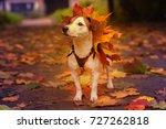 jack russell in autumn | Shutterstock . vector #727262818