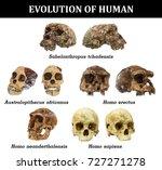 evolution of human skull  ...   Shutterstock . vector #727271278