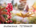 flowers.awakening.morning in my ... | Shutterstock . vector #727306639