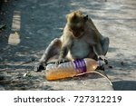 Monkey Animall