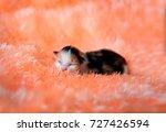 Sleeping Kitten On An Orange...