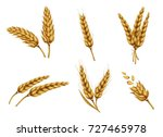 set of dried wheat ears  bunch... | Shutterstock .eps vector #727465978