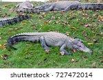 saltwater crocodile. | Shutterstock . vector #727472014