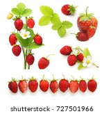 wild strawberry isolated on... | Shutterstock . vector #727501966