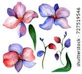 wildflower orchid flower... | Shutterstock . vector #727519546