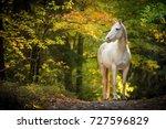 Portrait Of White Arabian Horse ...