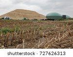 maize field after harvest with... | Shutterstock . vector #727626313
