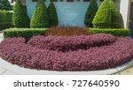 Small photo of shrub color beautiful, shrub decorate, shrub border