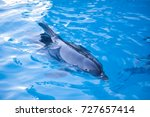 beautiful dolphin in the water. ... | Shutterstock . vector #727657414