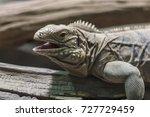 desert lizard  lacertilia | Shutterstock . vector #727729459