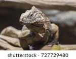 desert lizard  lacertilia | Shutterstock . vector #727729480