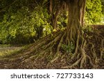 Roots of tree above the ground background - stock photo