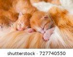 Red Kittens Fell Asleep On Mom