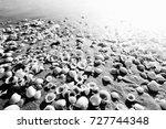Shells On Sandy Beach Near Sea...