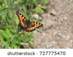 Butterfly In Nature Habitat....