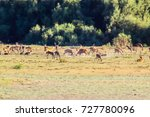 deers fighting during mating... | Shutterstock . vector #727780096