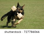 Stock photo utilities and defense dog 727786066