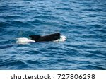 encounter with long finned... | Shutterstock . vector #727806298
