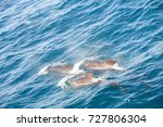 encounter with long finned... | Shutterstock . vector #727806304