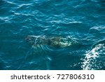 encounter with long finned... | Shutterstock . vector #727806310