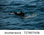 encounter with long finned... | Shutterstock . vector #727807438