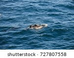 encounter with long finned... | Shutterstock . vector #727807558