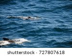 encounter with long finned... | Shutterstock . vector #727807618