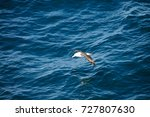 encounter with long finned... | Shutterstock . vector #727807630