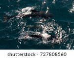 encounter with long finned... | Shutterstock . vector #727808560