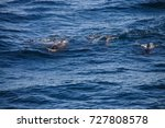 encounter with long finned... | Shutterstock . vector #727808578