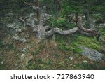 pine tree at the baltic coast ... | Shutterstock . vector #727863940
