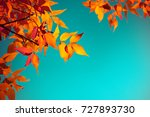 Small photo of Autumn leaves with the blue sky background, Yellow, red and green bright colorful leaves and branches, fall themes