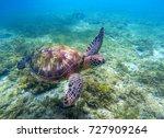 green sea turtle above seaweeds.... | Shutterstock . vector #727909264