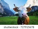 cow on alps. jungfrau region ... | Shutterstock . vector #727915678