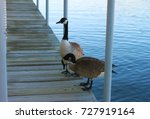 Two Canadian Geese On The Dock...