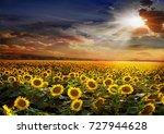 beautiful sunflowers field on...   Shutterstock . vector #727944628