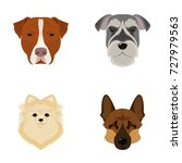 muzzle of different breeds of... | Shutterstock .eps vector #727979563
