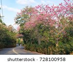 pink ceiba speciosa flowers... | Shutterstock . vector #728100958