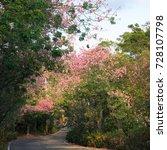 pink ceiba speciosa flowers... | Shutterstock . vector #728107798