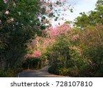 pink ceiba speciosa flowers... | Shutterstock . vector #728107810