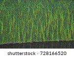 wall of ivy   Shutterstock . vector #728166520