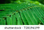 after the rain  water drops on... | Shutterstock . vector #728196199