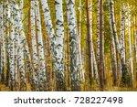 Autumn landscape of birch...