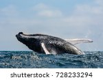 humpback whale jumping in... | Shutterstock . vector #728233294