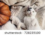 cute kitten relaxing on warm... | Shutterstock . vector #728235100